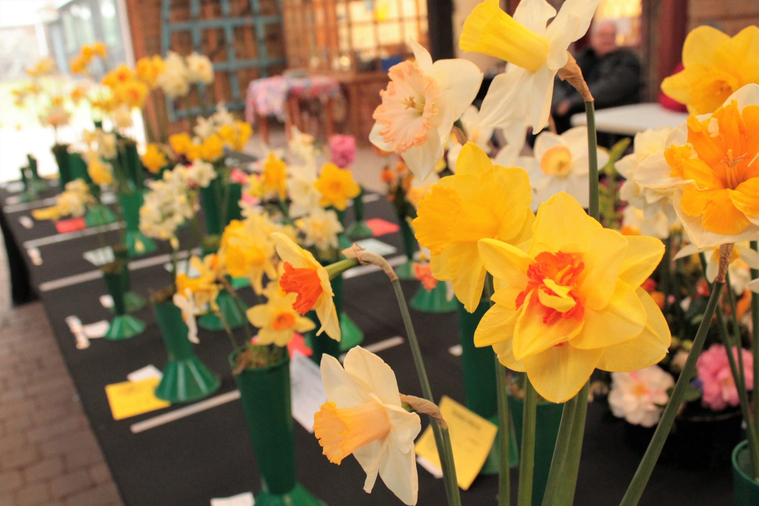 Tilford Gardening Club Spring Show